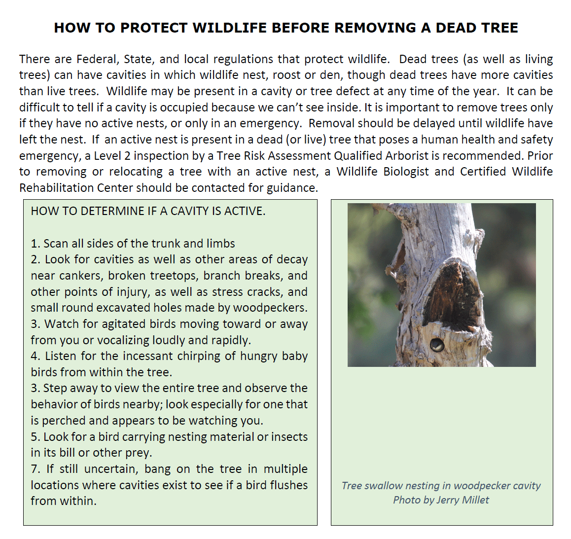 How to protect wildlife before removing a dead tree